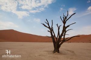 Toter Baum in Dead Vlei